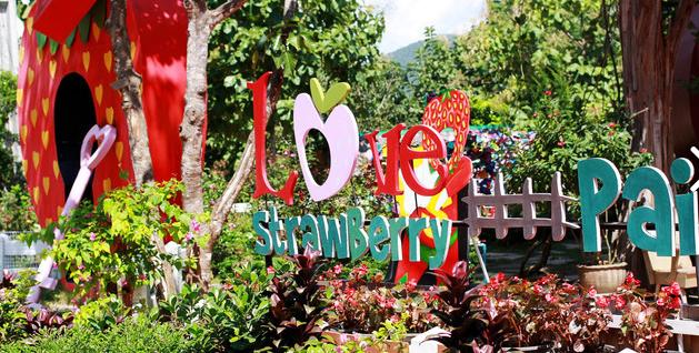 泰国拜县包车 拜县草莓园 (Love Strawberry Pai)