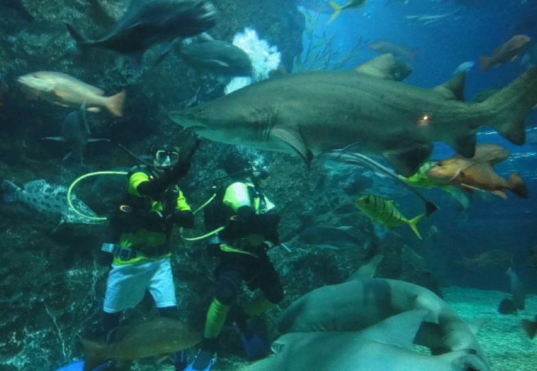 泰国曼谷水族馆