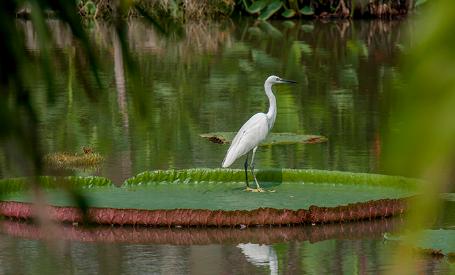 泰国拉玛九世皇家公园