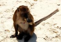 普吉岛猴子沙滩