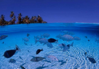 普吉岛斯米兰群岛