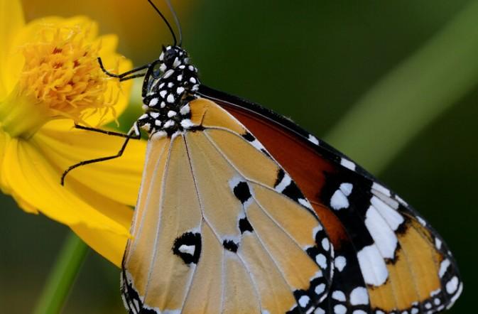 普吉岛蝴蝶公园和昆虫世界