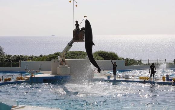 日本冲绳海洋博公园海豚表演剧场