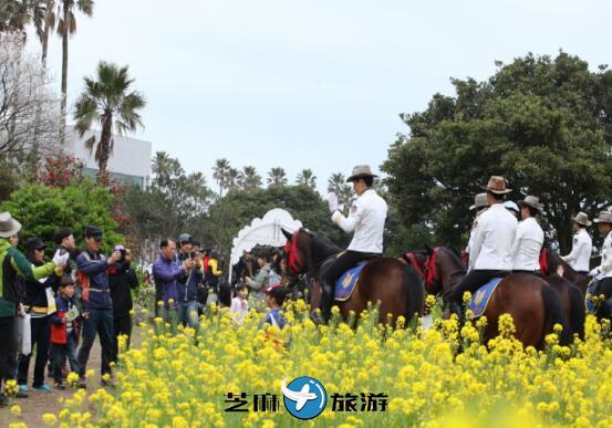 韩国庆典西归浦油菜花国际徒步大会包车服务