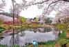韩国庆州 世界文化遗产与樱花、油菜花的浪漫相遇 包车一日游