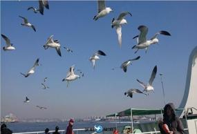 韩国仁川海鸥船+童话壁画村+富平地下街一日包车服务