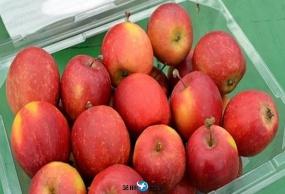 韩国摘苹果+DIY苹果酱+香草乐园赏夜灯一日游包车服务