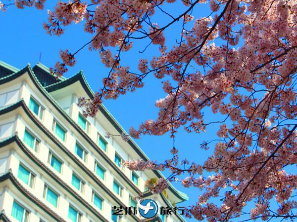 韩国 迎接春天,踏上樱花之旅:漫步「釜山」迎接片片飞舞樱花瓣