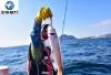 芝麻旅行 韩国济州岛冬季海钓团 船钓 岸钓 行程定制包车