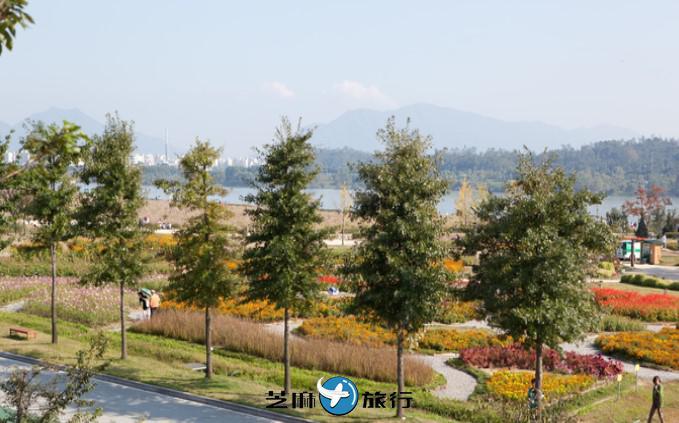 韩国九里市民汉江公园 (韩国波斯菊公园)
